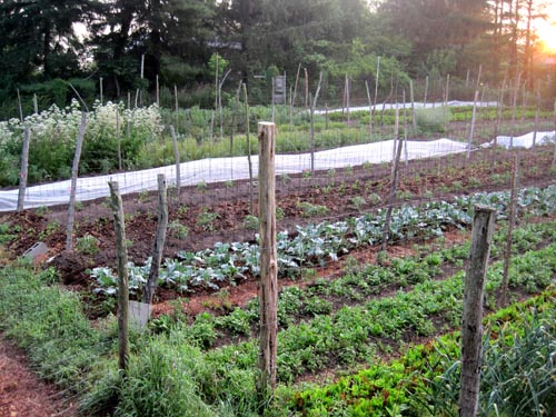 Greenstar garden beds awash in the sunset